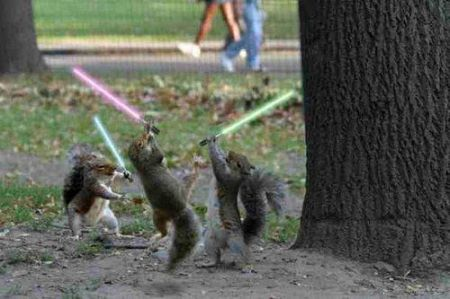 jedi_squirrels_with_lightsabers1